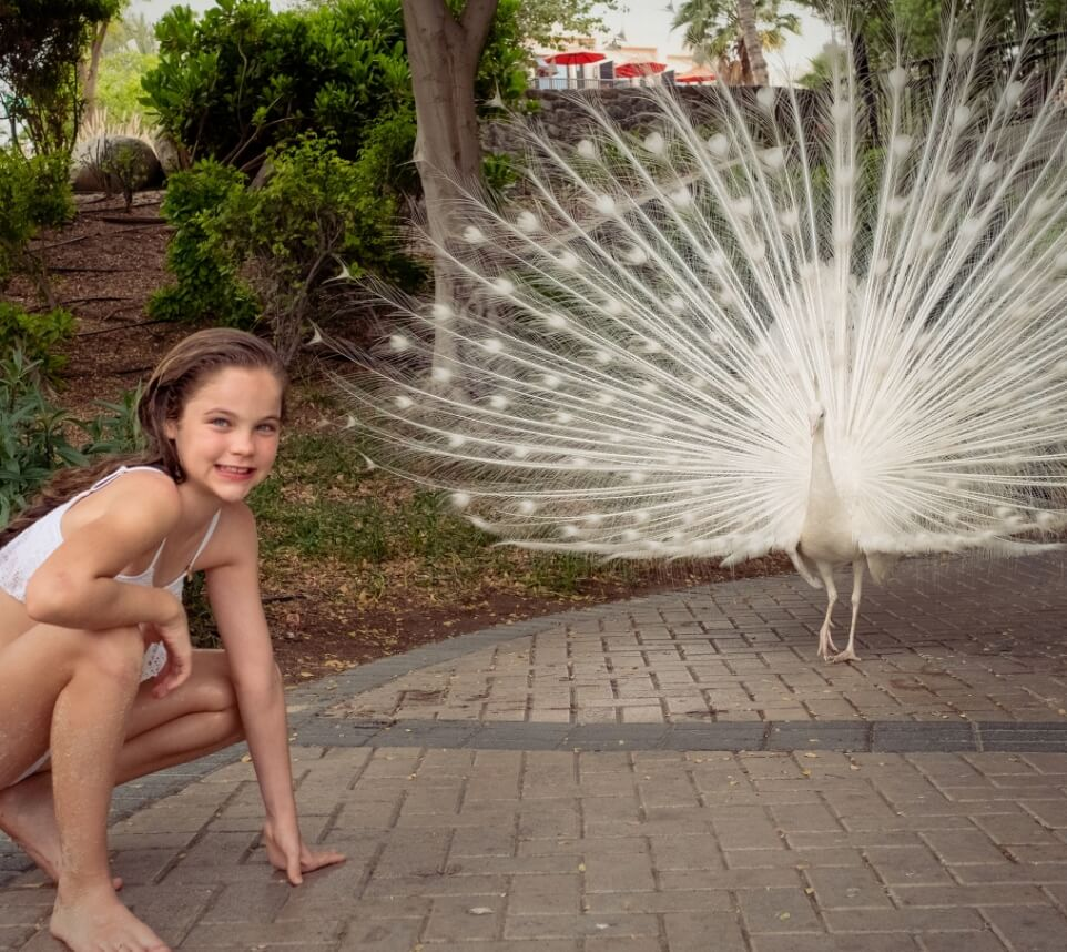 Girl With White Peacock