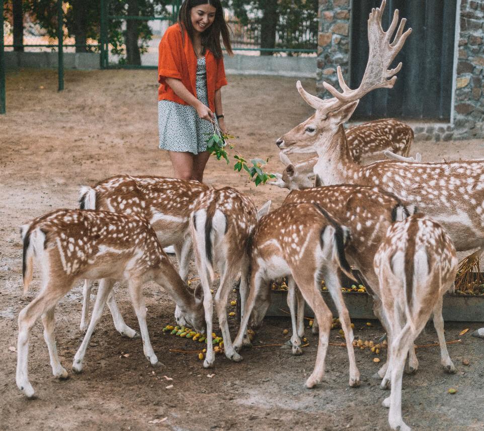 Wildlife-Discovery.jpg
